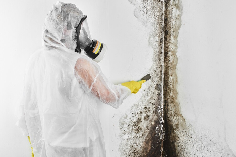 Mold Removal Prices by Services 3,2,1 Corp